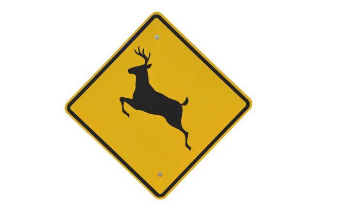 Deer Crossing Sign   Outdoor Newspaper