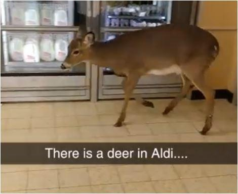 The Whole Story of The Deer Who Went Shopping at a Pennsylvania Aldis