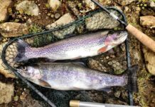 Trout Fishing in Idaho