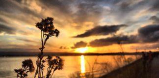 Waterfowl hunters can help stop spread of aquatic invasive species | Outdoor Newspaper
