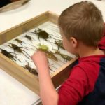 Young Child Learning About Insects from Andrew Markey's (AKA - @bugboy) Collection