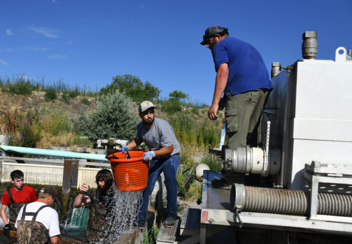 30,000 channel catfish stocked across Idaho's lakes and reservoirs - Outdoor Newspaper