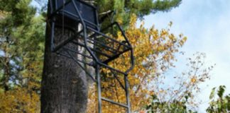 Hunter wearing a full-body harness climbs a treestand Photo credit WI DNR   Outdoor Newspaper