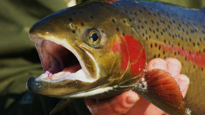 Trout Stocking in Maryland Resumes for Fall Fishing   Outdoor Newspaper