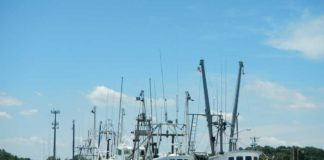 CARES Act Funding Available for Maryland Fishing Industry - Photo by Angel Willey