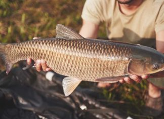 Illinois and Michigan Advance Invasive Carp Prevention Project - Outdoor Newspaper