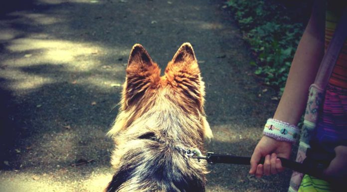 Dogs Must Be on a Leash in National Forest Areas