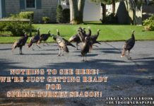 Nothing to See Here Just Getting Ready for Spring Turkey Season - Outdoor Newspaper